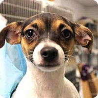 Adopt A Pet :: TABITHA - Wainscott, NY