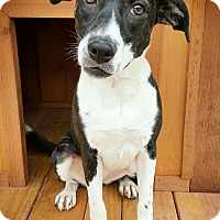 Beagle/Terrier (Unknown Type, Small) Mix Dog for adoption in Fredericksburg, Texas - Autumn