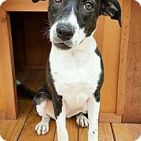 Adopt A Pet :: Autumn - Fredericksburg, TX