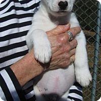 Adopt A Pet :: ETHAN - South Burlington, VT