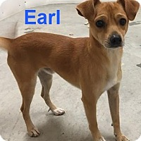 Adopt A Pet :: Earl - Mountain View, AR