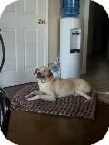 Labrador Retriever/Collie Mix Dog for adoption in Northumberland, Ontario - norm