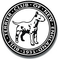 Adopt A Pet :: Bull Terriers - New York, NY