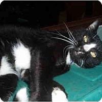 Adopt A Pet :: Bindu - Hamburg, NY