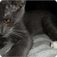 Adopt A Pet :: Cassandra - Davis, CA