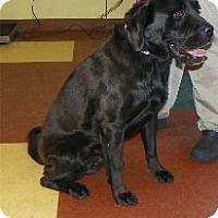 Adopt A Pet :: Rosco - Phoenix, AZ