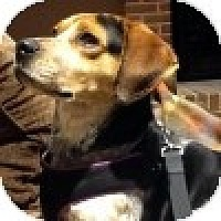 Adopt A Pet :: Morton - Novi, MI