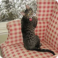 Adopt A Pet :: BUDDY & PETE - 2013 - Hamilton, NJ