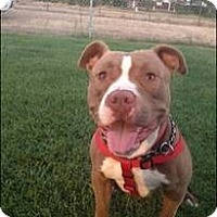 Adopt A Pet :: Huckleberry - Rancho Cordova, CA