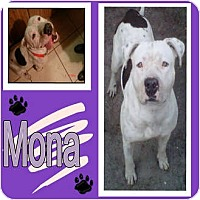 Adopt A Pet :: MONA - Hollywood, FL