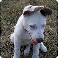 Adopt A Pet :: Bumper - Hagerstown, MD