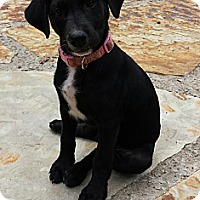 Adopt A Pet :: Macie - Hagerstown, MD