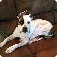 Adopt A Pet :: Rosie - Raritan, NJ