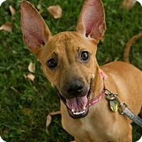 Adopt A Pet :: Tazo - Scottsdale, AZ