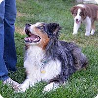 Adopt A Pet :: Frankie - Washington, IL