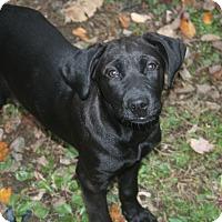 Adopt A Pet :: Glenn - Morgantown, WV