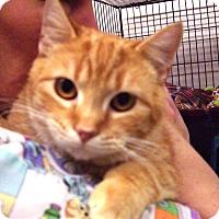 Adopt A Pet :: Goldstone - Alden, IA