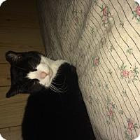 Adopt A Pet :: Sophia - Clay, NY