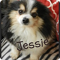 Adopt A Pet :: Jessie - Orange, CA