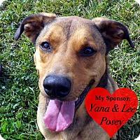 Adopt A Pet :: Toby - San Leon, TX