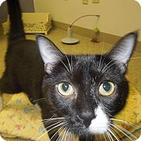 Adopt A Pet :: Molly 2 - Medina, OH