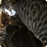 Adopt A Pet :: Luke&casy - Clay, NY
