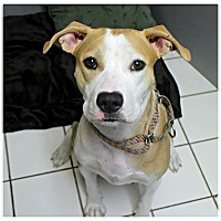 Adopt A Pet :: Mama Angel - Forked River, NJ