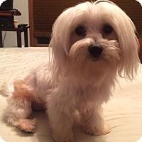 Adopt A Pet :: Riley Adoption pending - East Hartford, CT