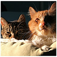 Adopt A Pet :: Mikko & Mako - Forked River, NJ