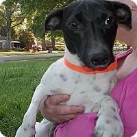 Adopt A Pet :: Heckle - Memphis, TN
