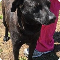Adopt A Pet :: Indy - Buckeystown, MD