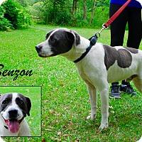 Adopt A Pet :: Benzon - Daleville, AL