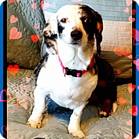 Adopt A Pet :: Tinkerbelle - Green Cove Springs, FL
