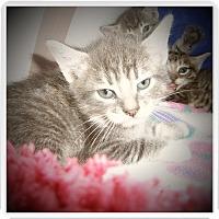 Adopt A Pet :: ASHTON - Medford, WI