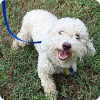 Adopt A Pet :: Messina - McKinney, TX