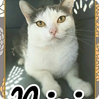 Adopt A Pet :: Nini - Edwards AFB, CA