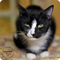 Adopt A Pet :: Aberia - Lyons, NY