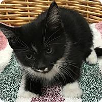 Adopt A Pet :: St.Nick - Decatur, AL