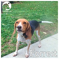 Adopt A Pet :: Forrest - Pittsburgh, PA