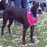 Adopt A Pet :: LUNA LOVEGOOD - Albany, NY