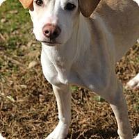 Adopt A Pet :: Ella - Camden, DE