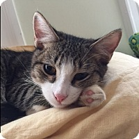 Adopt A Pet :: Jesse - Los Angeles, CA