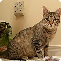 Adopt A Pet :: Polly - Toronto, ON