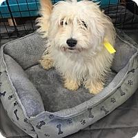 Adopt A Pet :: Arlo - Brea, CA