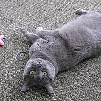 Adopt A Pet :: Shadow - Cerritos, CA