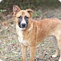 Shepherd (Unknown Type) Mix Dog for adoption in Portland, Maine - DOC COOPER