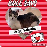 Adopt A Pet :: Bree - Keller, TX