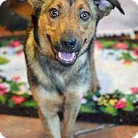 Adopt A Pet :: Roxy Girl - Hagerstown, MD