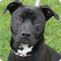 Adopt A Pet :: MIA - Red Bluff, CA