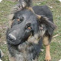 Adopt A Pet :: Bandit - Conesus, NY